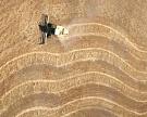 Экспортные цены на пшеницу за неделю выросли на $2