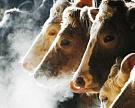 Минсельхоз сообщает об увеличении производства скота и птицы