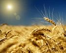 Агрохолдинги России. Зима 2015