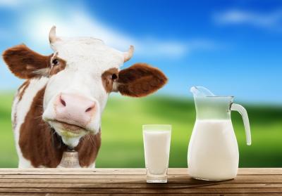 Органическое молоко не лучше обычного