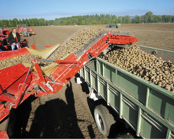 Рынок наподъеме: обзор рынка картофелеуборочной техники