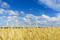 Direct. Farm бесплатно поможет аграриям с продажами зерна