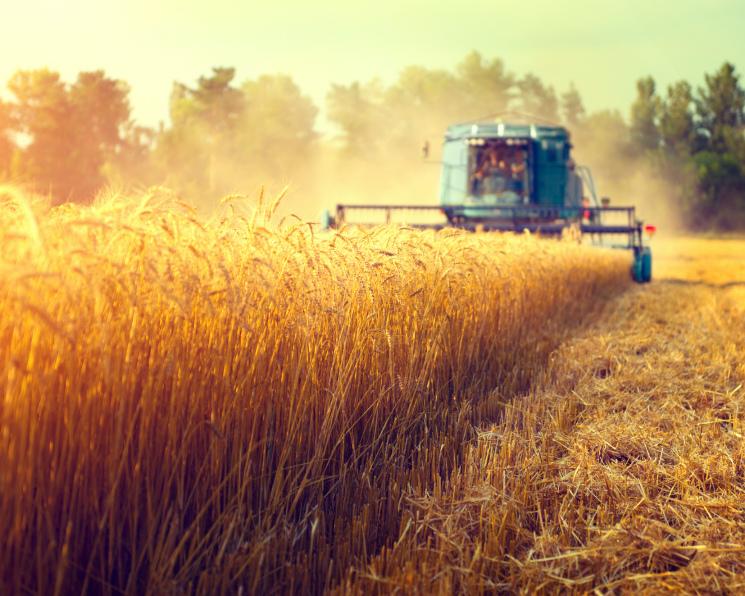 Ячмень дороже пшеницы. Почему в этом сезоне сложилась такая аномалия
