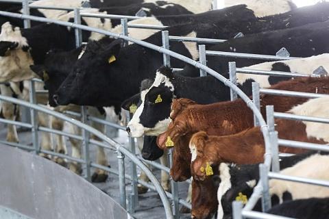 Крупнейший производитель молока нарастил выручку на 37% в 2018 году