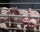 «Башкирская мясная компания» инвестирует в развитие бизнеса свыше 25 млрд рублей
