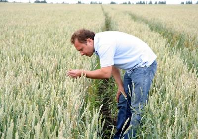 Аграрный опыт: 70% семенного материала в «ГК Агро-Белогорье» — это сорта местной селекции
