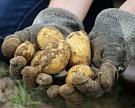 Урожай овощей открытого грунта составит 16 млн тонн