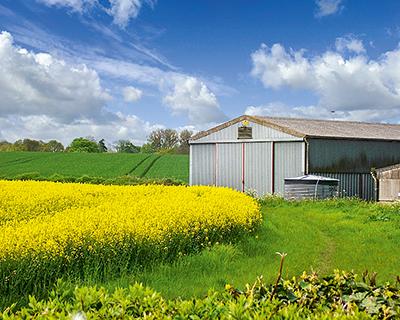 Посевы рыжика, горчицы и сафлора динамично растут