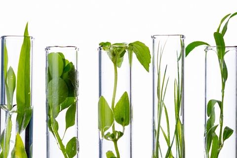 Поле из пробирки. В ФИЦ биотехнологий РАН разработали универсальную вертикальную ферму для выращивания промышленных сельхозкультур