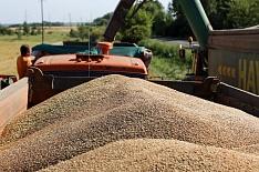Намолот зерна опустился ниже прошлогоднего уровня