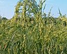 «Держава» производит биотопливо излузги