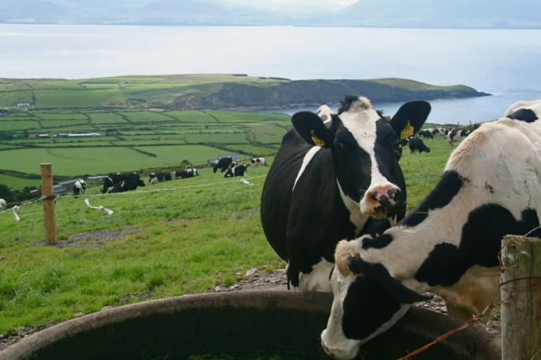 Кто занял место США на рынке скота