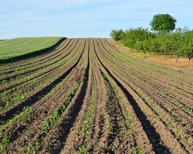 Лидеры агрорынка расширили посевы. Посевная площадь 25 крупнейших агрохолдингов приблизилась к 8 млн гектаров