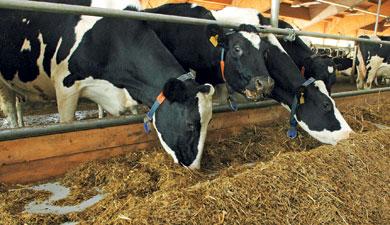 ВСША требуют запретить кормить скот пометом