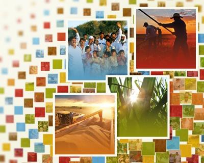 Monsanto опубликовала отчет обустойчивом развитии за2014 год