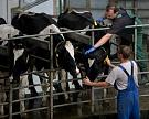 Россия может восполнить дефицит молока через 20−25 лет