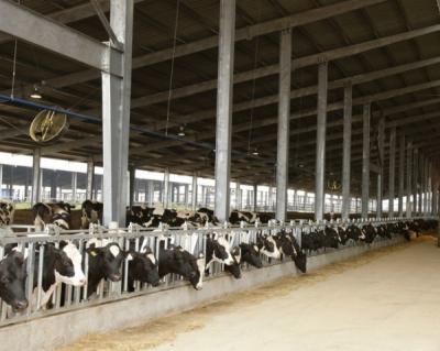 ТН Group строит молочный кластер в Подмосковье