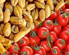 Россия сможет поставить вТурцию 300 тысяч тонн пшеницы доконца сезона
