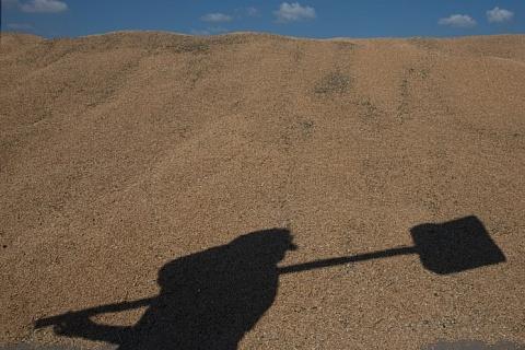 Россельхознадзор подтвердил претензии к качеству экспортируемой из Калининградской области пшеницы