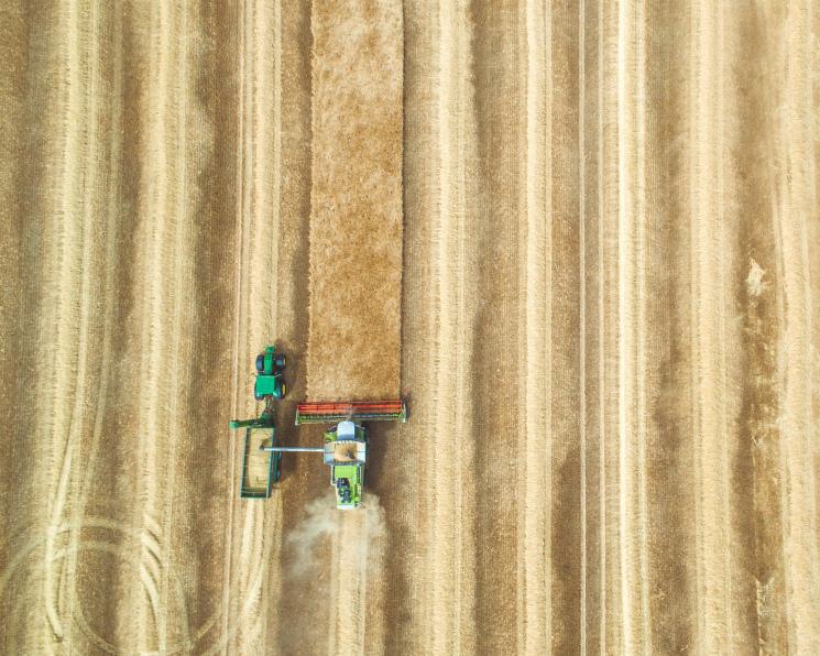Влияние рекорда преувеличено: как страна справляется с перепроизводством зерна