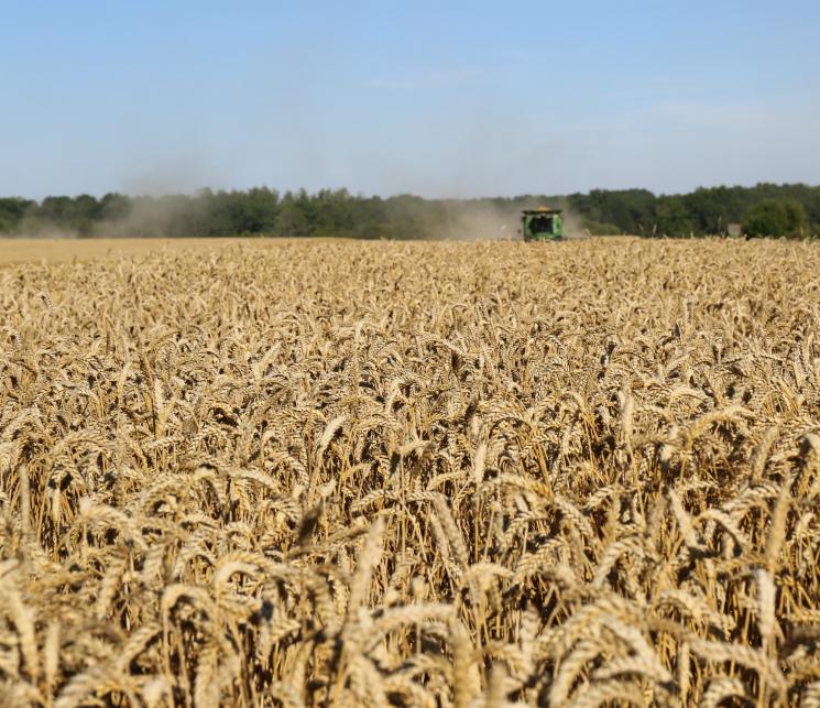 Прогнозы урожая зерна достигли 134 млн тонн