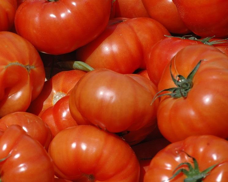 Вэтом сезоне наТурцию может прийтись около 10% российского импорта томатов