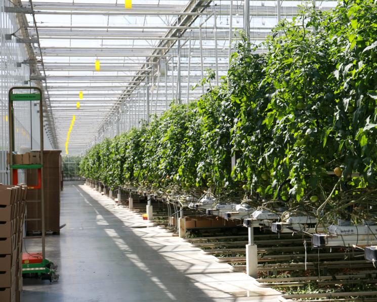 «Технологии тепличного роста» начали реализацию проекта под Тамбовом