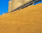 Экспорт зерна превысит 25 млн т