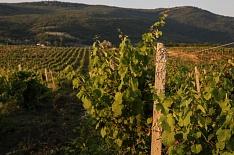 Патрушев предложил удвоить господдержку виноградарства