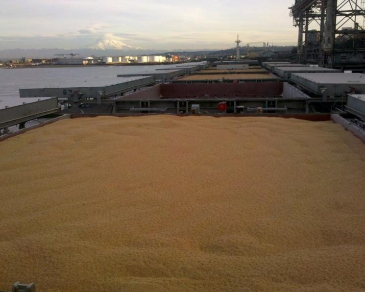 Минсельхоз разрабатывает новый инструмент для ограничения экспорта зерна