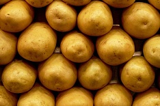 Европейский семенной картофель может подорожать на 15%