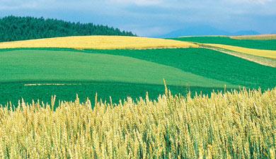 Самый северный агропром Урала