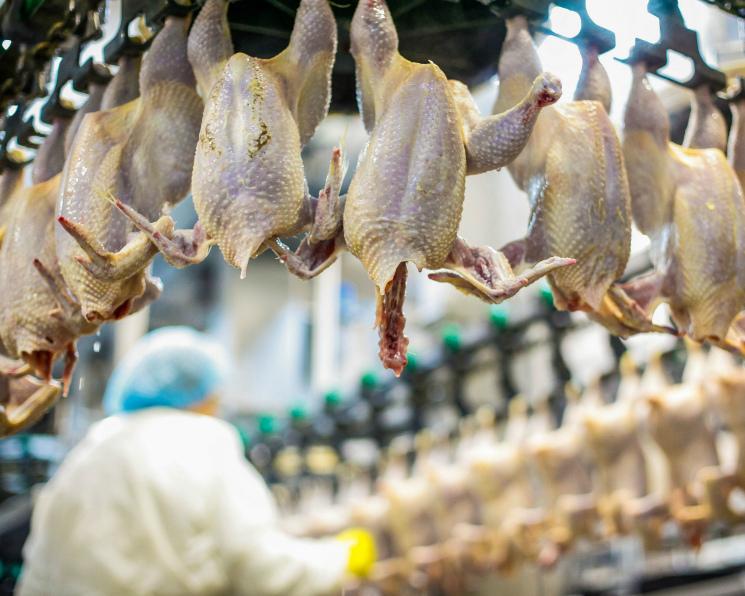 Топ-25 крупнейших российских производителей мяса. Лидеры рынка продолжат консолидацию
