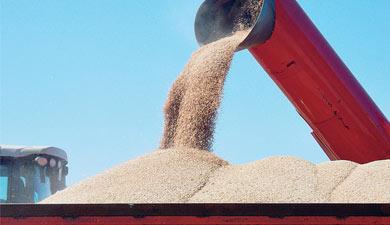 МЭР спрогнозировало зерно