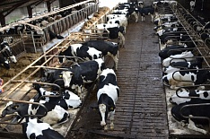 Вьетнамский холдинг начал строительство молокозавода в Калужской области