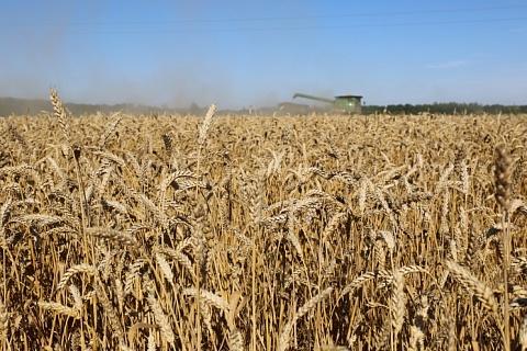 Урожай зерна все еще может обновить рекорд
