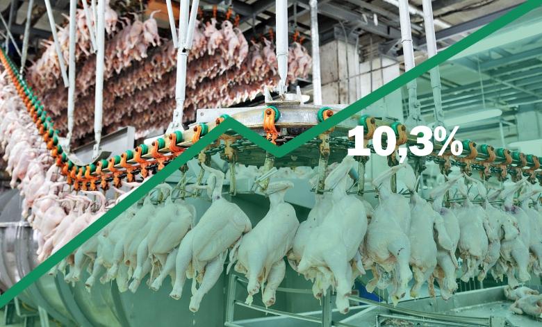 На10,3% выросло производство мяса птицы