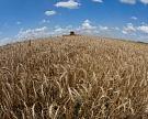 В ряде регионов зерновой рынок приблизился к ценовому дну