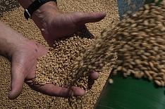 Минсельхоз готовит систему госконтроля за зерном
