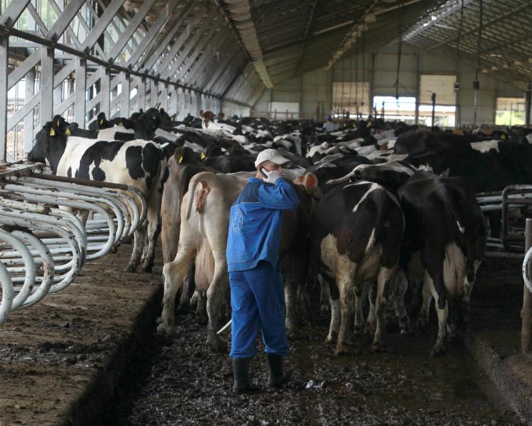 ТНTrue Milk запустит подмосковный комплекс вмае