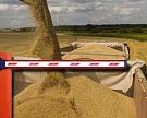 Экспортеры зерна не заключают новые контракты