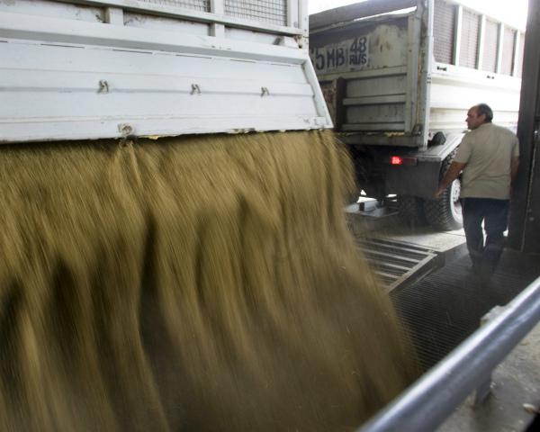 Закупочные интервенции зерна урожая следующего года начнутся сКрыма