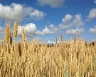 «Продимекс» запустил семенной завод в Воронежской области