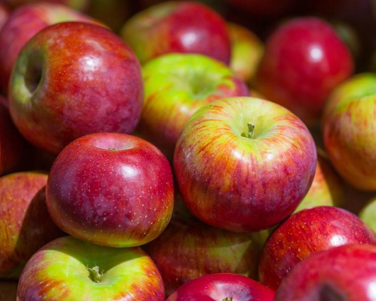 Прогноз урожая яблок понижен