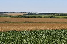 Средняя рентабельность агропроизводства увеличилась до 5-7%