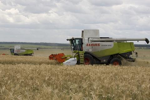 Июньская жара привела к резкому снижению прогнозов урожая зерна