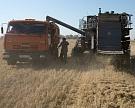 Урожай пшеницы может обновить рекорд