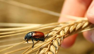 Вэтом году заработает новая система страхования урожая