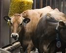 «Русагро» и TH Group вложат 46 млрд рублей в производство молока на Дальнем Востоке