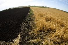 Агрострахование посевов к 2025 году должно вырасти в 20 раз